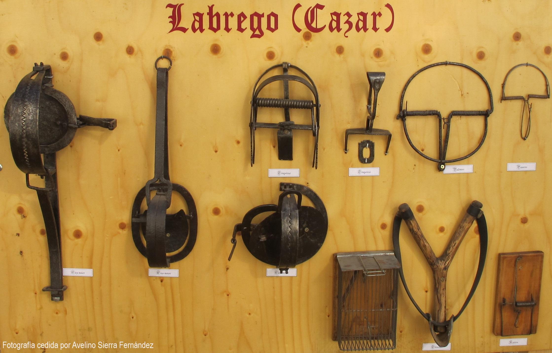 7 Labrego - Cazar