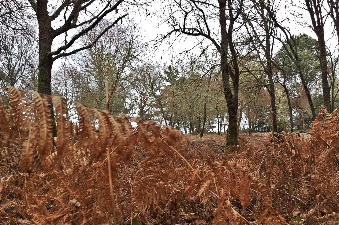 E44. Árboles y arbustos de los montes de Parderrubias. Por Juan Carlos SierraFreire